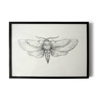 """Moth""- illustration 21x30 cm"